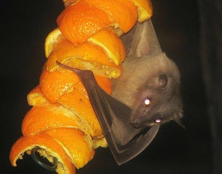 9+ Free Fruit Bat & Bat Photos - Pixabay