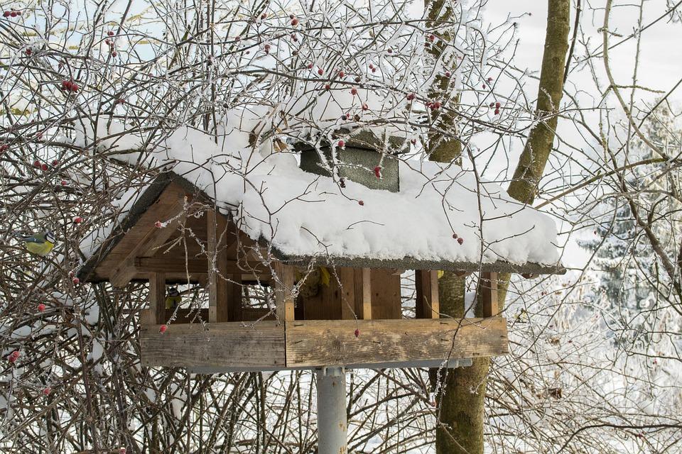 kostenloses foto vogelhaus vogel v gel schnee. Black Bedroom Furniture Sets. Home Design Ideas