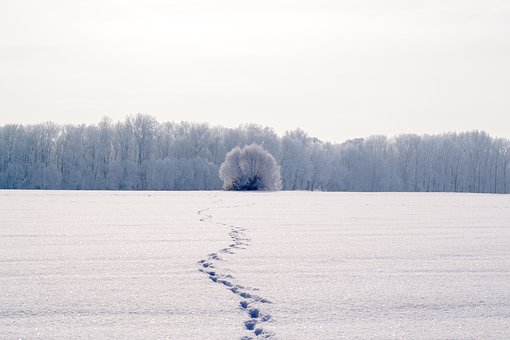 100+ Free Snow Lane & Snow Photos - Pixabay