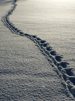 Snow, Footprints, Winter, White