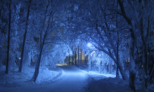 Free Photo Winter Night Blue Shade Trees Free Image