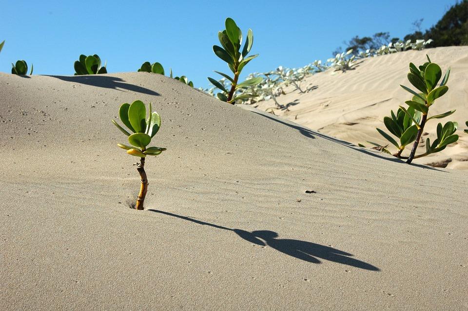 Africa, Landscape, Desert, Scenery, Nature, Dry, Sand