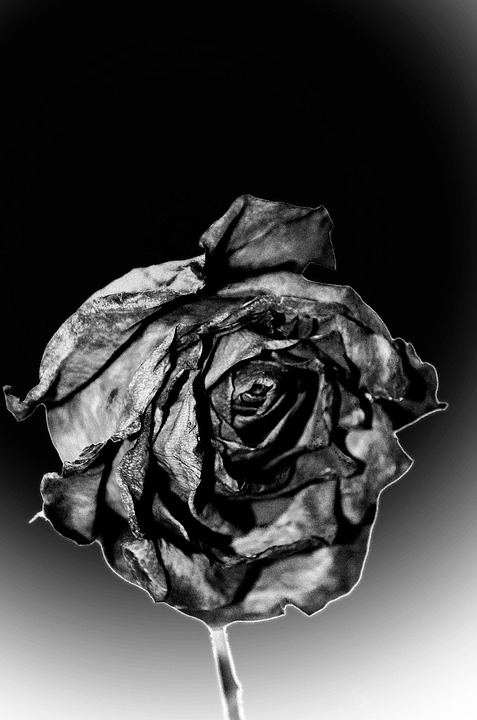 photo gratuite: morts, rose, fin, tristesse, fleurs - image