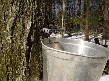 Maple, Sugar Season, Boiler, Syrup