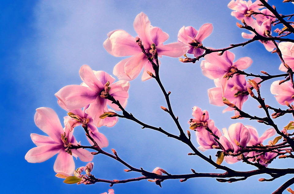 Free photo: Spring, Tree, Branch, Branches - Free Image on ...