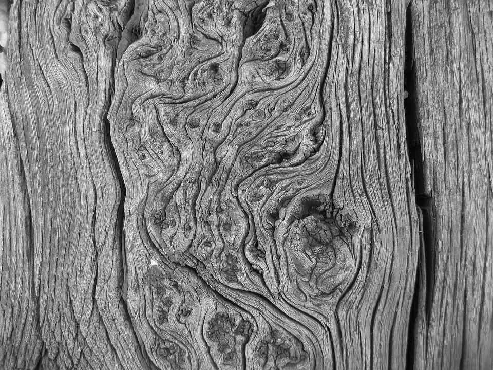 Legno Bianco E Nero : Foto in bianco e nero legno tronco · foto gratis su pixabay