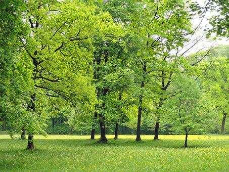 Německo, Příroda, Stromy, Olistění, Les