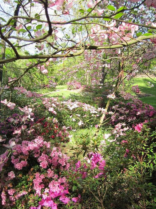 Photo gratuite parc paysage jardin printemps image for Fleurs jardin printemps