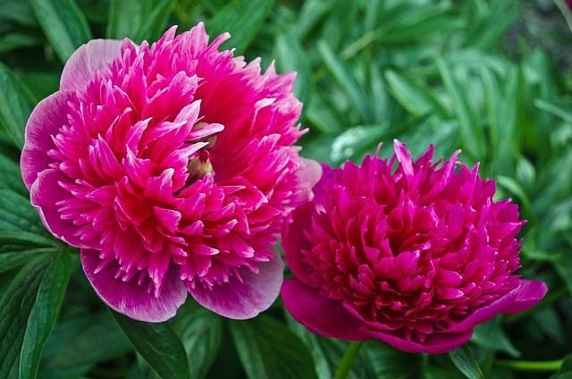 Flowers flower spring free photo on pixabay mightylinksfo