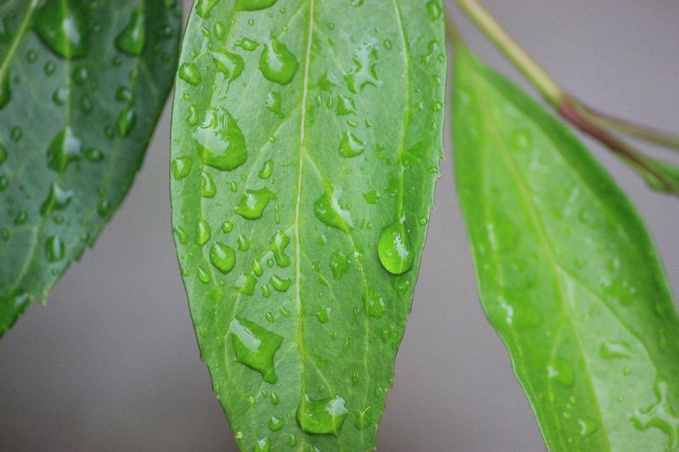 Фотографии на листьях