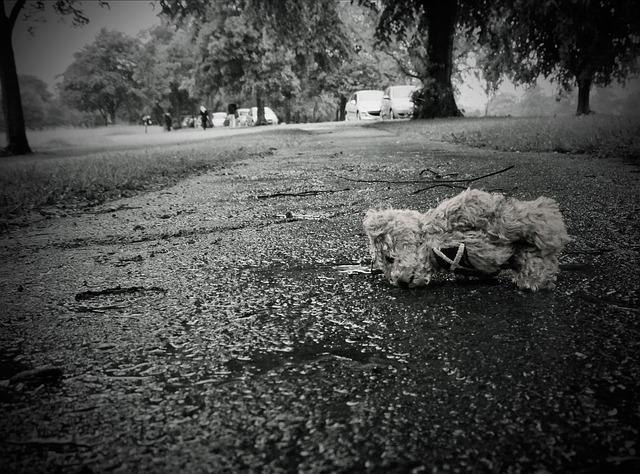 Lost Teddy Bear ·...