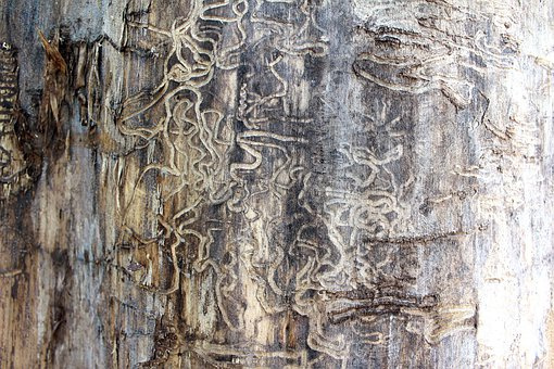 Termite, Tracks, Tree, Damage, Nature