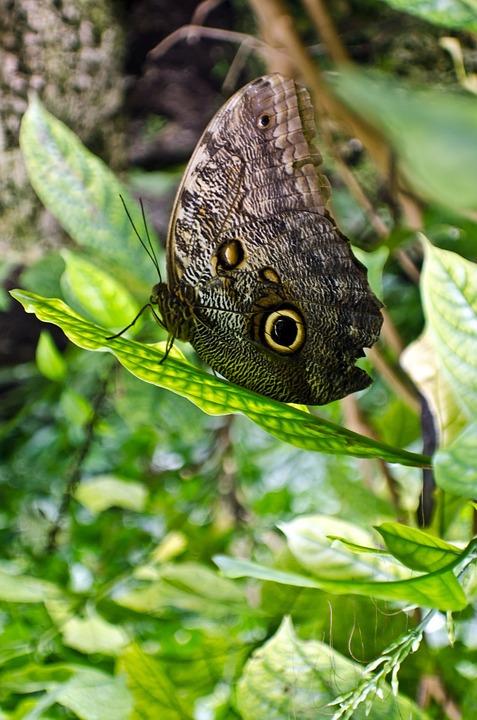 Hewan Cantik Kecantikan Foto Gratis Di Pixabay