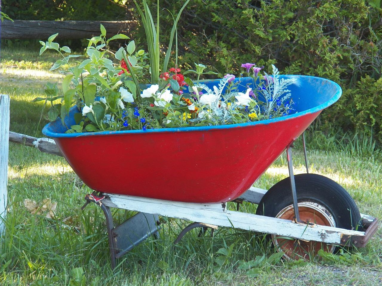 Тачка под цветы в саду фото и