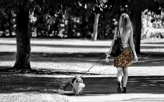 Girl, Dog, Walk, Park, Color, Path