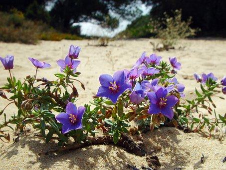 비치, 꽃의, 식물, 자연의, 꽃, 블 룸, 꽃잎, 식물의, 유기적인