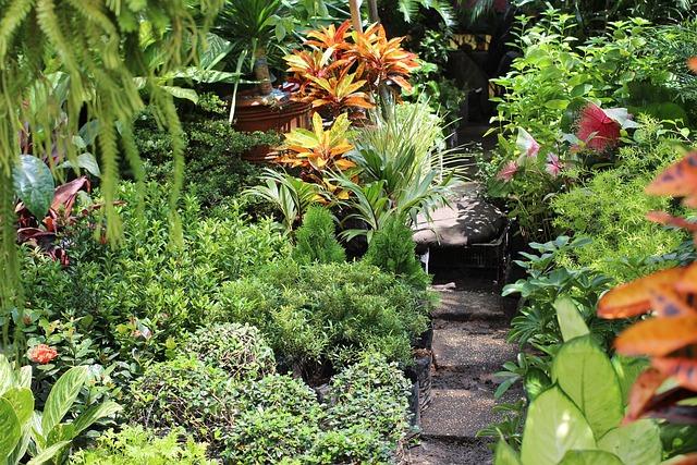 Free photo garden green philippines manila free - Plantas tropicales para jardin ...