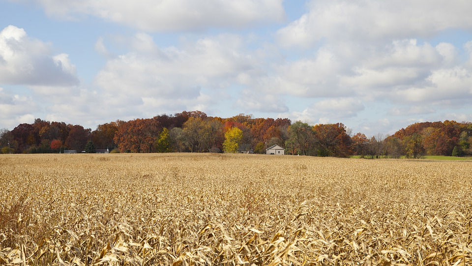 Free photo: Indiana, Farm, Forest, Trees, Woods - Free Image on ...