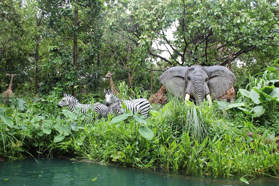 kostenloses foto dschungel tiere zebra elefanten kostenloses bild auf pixabay 72812. Black Bedroom Furniture Sets. Home Design Ideas