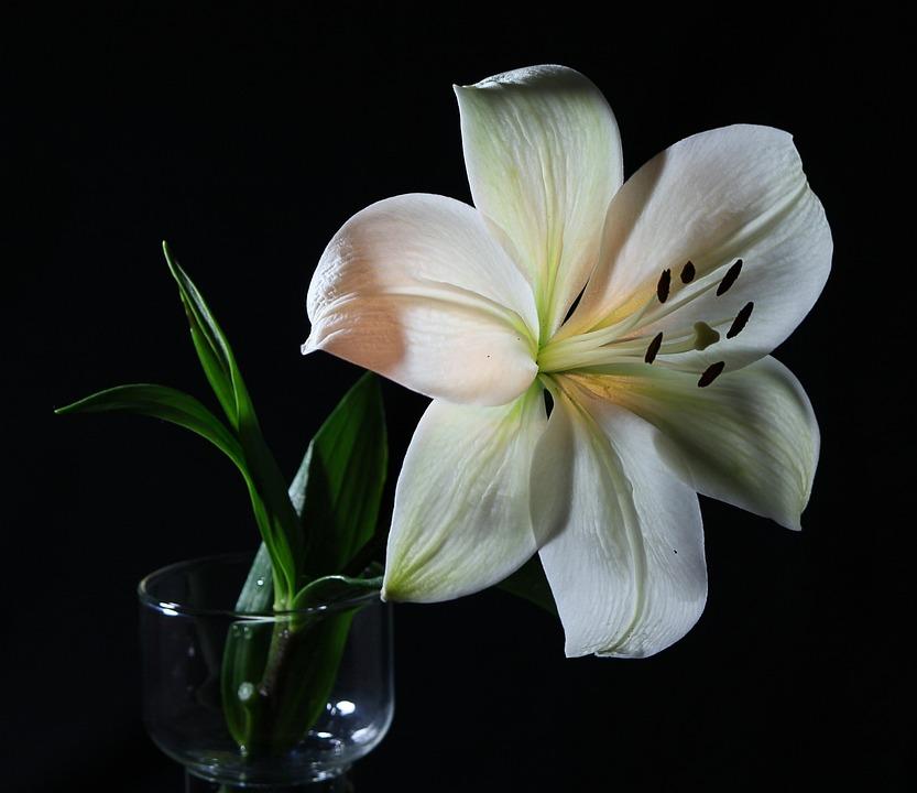 Lys Blanc Images Pixabay Telechargez Des Images Gratuites