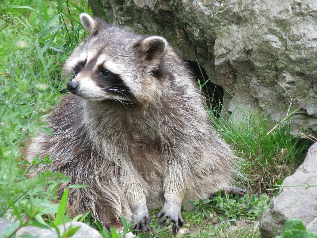 представлен северная америка картинки животный мир популярность обусловлена