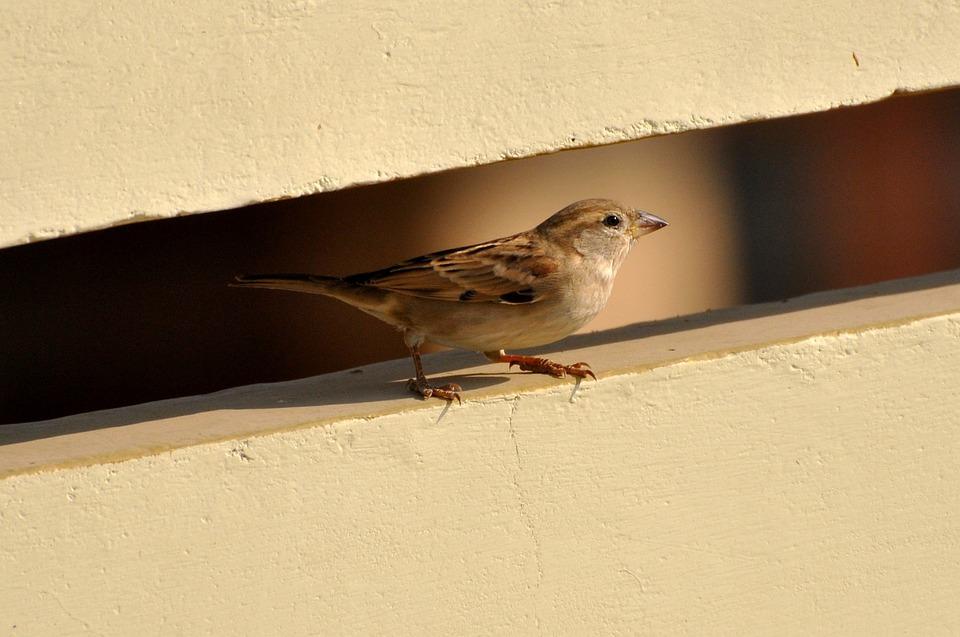 صورة لعصفورة رمادى اللون واقفة فوق جدار صغير