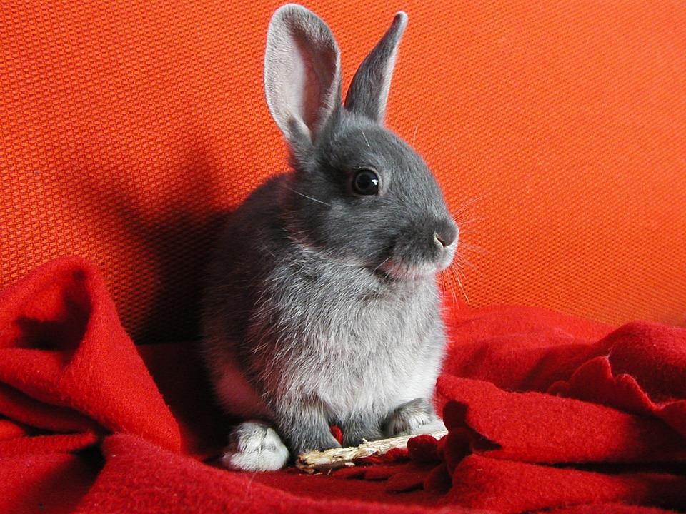 Nature, Rabbit, Bunny, Plush, White, Bianca