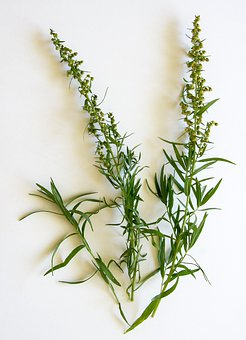 À L'Estragon, Épices, Herbes, Herb