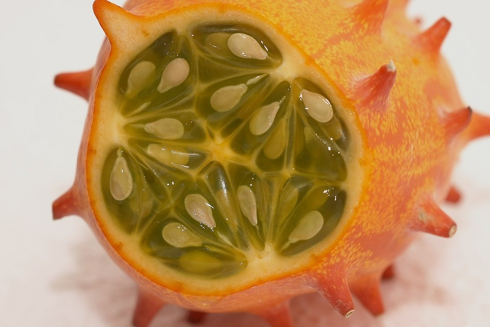 Horn Melon 101
