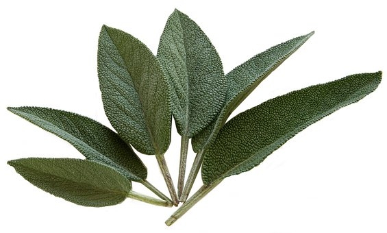 Sage, Kraeuer, Spice, Sage Leaves, Food