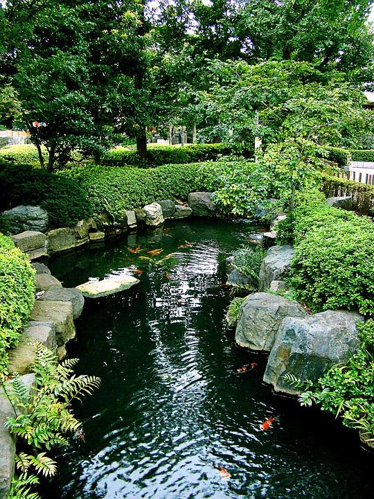 Free photo japan tokyo asakusa koi garden free for Japanese koi pond garden