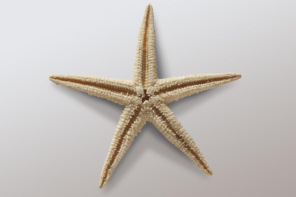 Free Photo Starfish Asteroidea Free Image On Pixabay