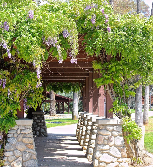 wisteria vine path free photo on pixabay. Black Bedroom Furniture Sets. Home Design Ideas