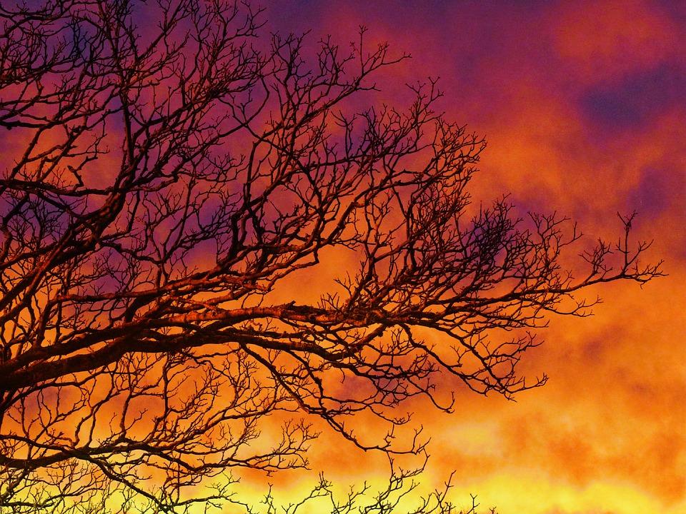 Free photo Clouds Red Sunset Tree Sky Beautiful Orange - Max Pixel