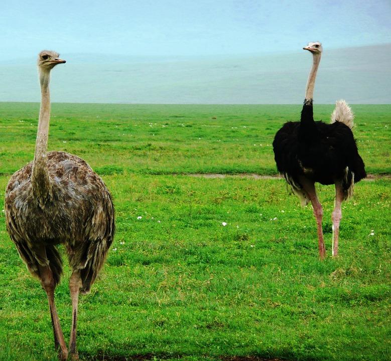 Africké velké ptáky