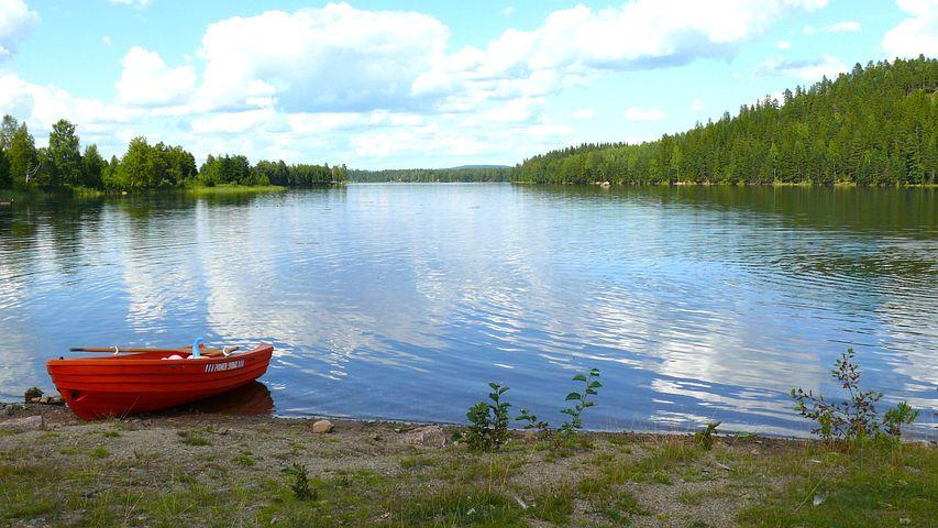 Sjön Saxen, Sverige, Vatten, Skog, Träd