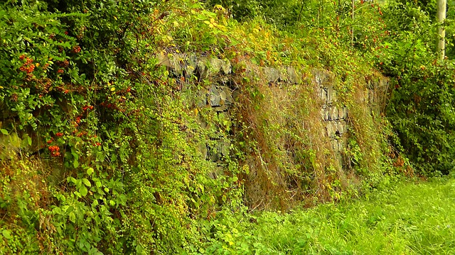 free photo  hedge  wild hedge  wall  stones