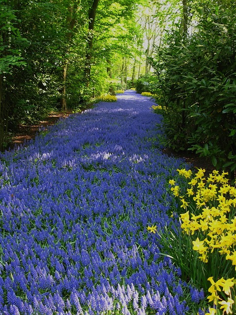 foto gratis rboles paisaje jardn flores imagen gratis en pixabay
