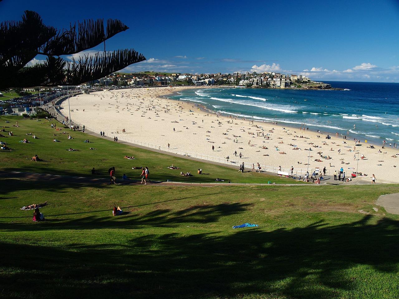 вид фото австралийского пляжа древесины