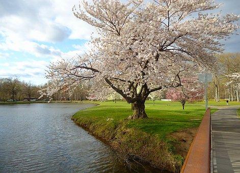 New Jersey, Spring, Landscape, Stream