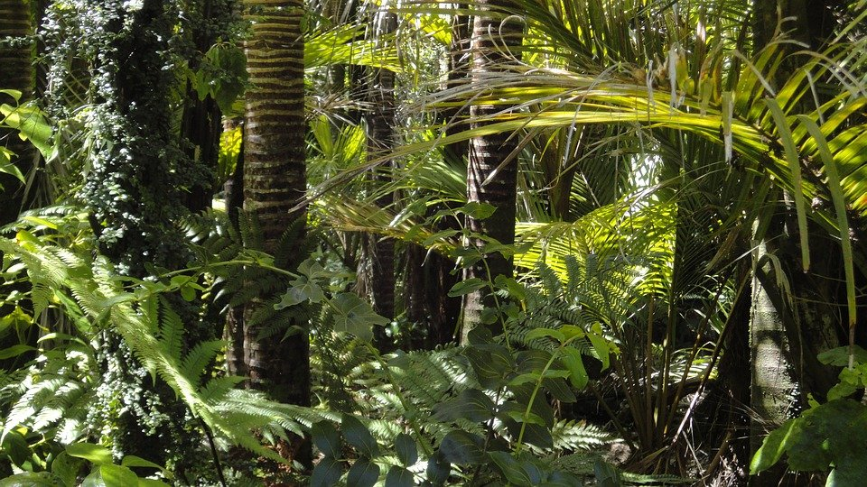 Rainforest, Palm Trees, Moss, Amazon Indians, Tree