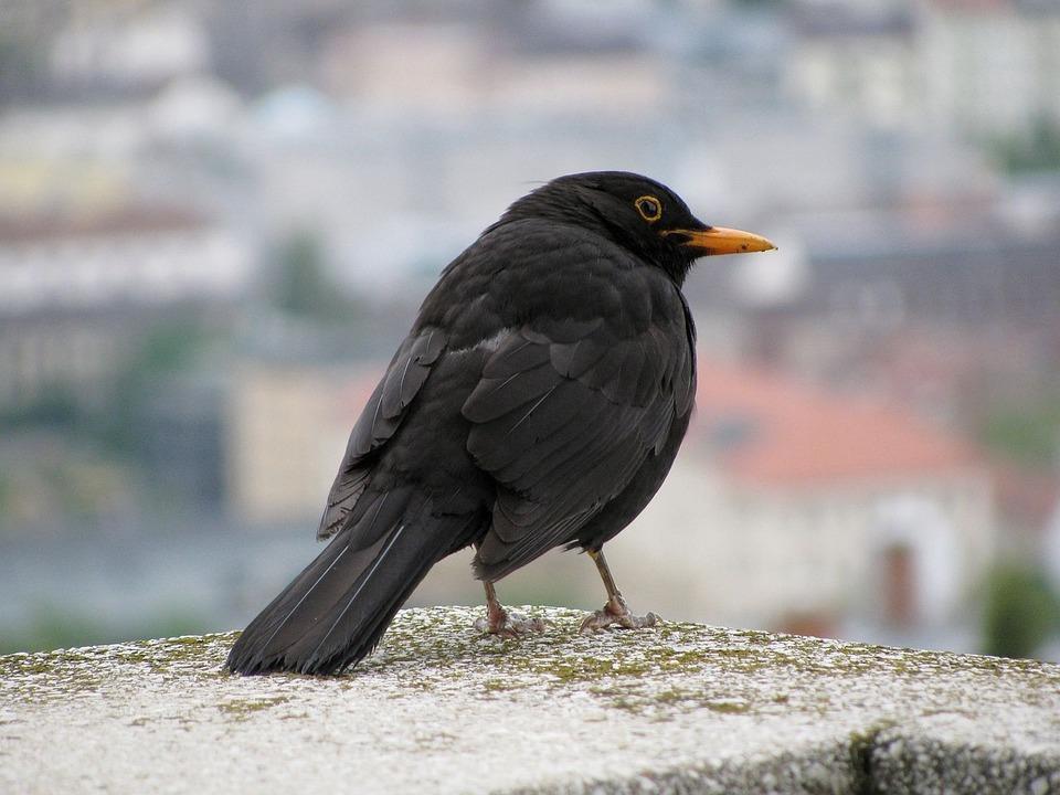 το μαύρο πουλί πολλαπλές Πρωκτική Εκσπερμάτιση μέσα βίντεο