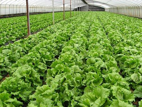 Organic, Farm, Vegetables
