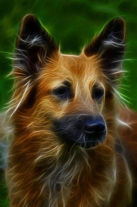 dog digital art fractal  u00b7 free image on pixabay