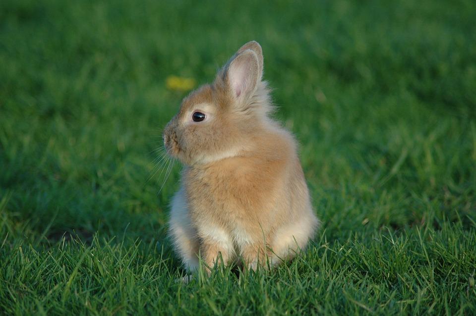 Prairie Rabbit Grass Animals 79559