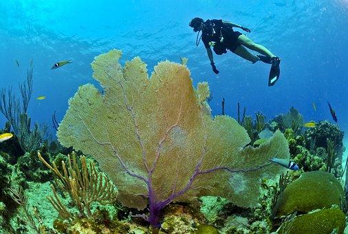 Mergulhador, Mergulho, Subaquático, Mar, Oceano