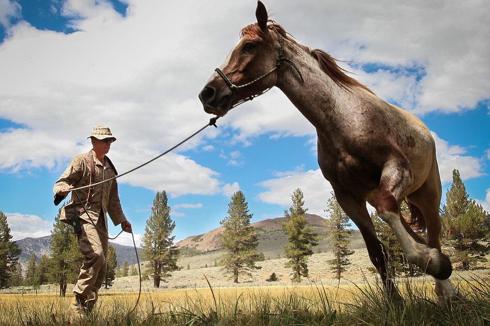 Horse, Man, Army, Training, Leading, Landscape, Trees