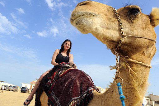 Iraq, Camel, Woman, Female, Riding