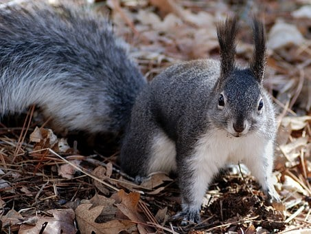 Squirrel, Nature, Outside, Close-Up