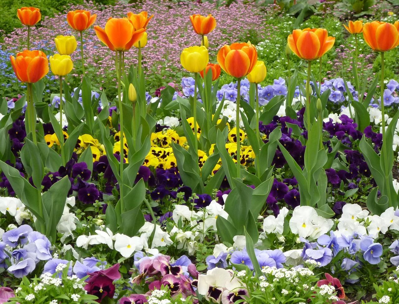 цветник весной фото